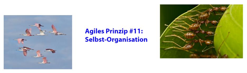 Agiles Prinzip 11: Selbst-Organisation